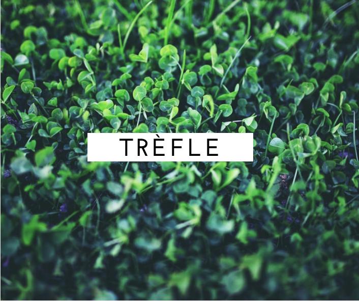 trefle-symbole-irlandais